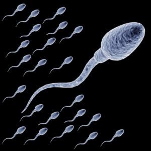 Male-Sperm